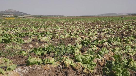 Salvemos el Arabí denuncia el abandono de las hortalizas y pide ...
